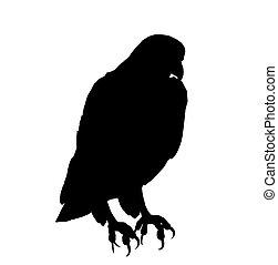 Eagle Illustration Silhouette