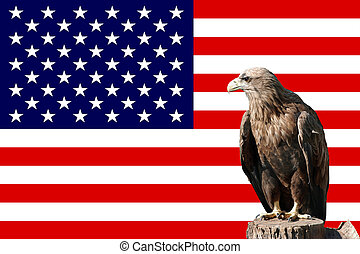 eagle in-front of the american flag
