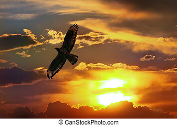 Eagle in sunset the sky - Flying proud eagle in sunset the...