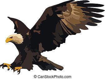 Eagle landing. - Vector illustration of the landing eagle...