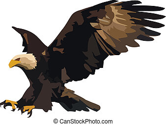 Eagle landing. - Vector illustration of the landing eagle...