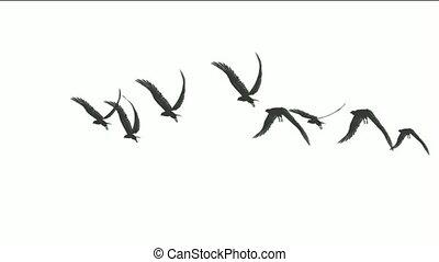 eagle., mouche, troupeau, oiseaux, sur