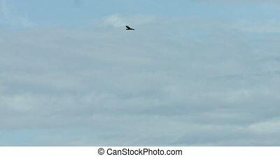 Eagle on blue sky