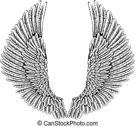 Eagle or angel wings - An illustration of a pair of angel or...