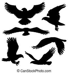 Eagle or hawk silhouettes with broad wings - Flying eagle,...