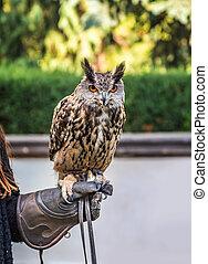 Eagle owl bird on a gloved hand.