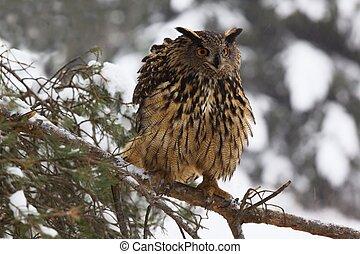 Eagle owl /Bubo Bubo/