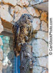 Eagle Owl - Bubo Bubo - is sitting on a log and looking out ...