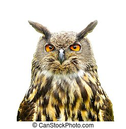 Eagle Owl (Bubo Bubo) isolated on white. - Portrait of an ...