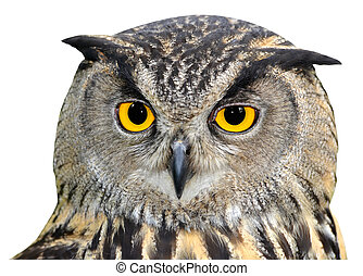 Eagle Owl, Bubo bubo isolated
