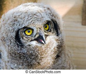 Eagle Owl Chick 2