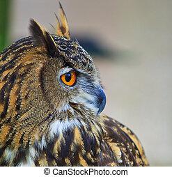 Eagle Owl