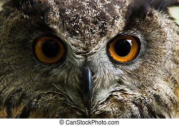Eagle owl with big orange eyes