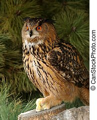 Eagle owl with prey. - An eagle owl, oehoe with prey.