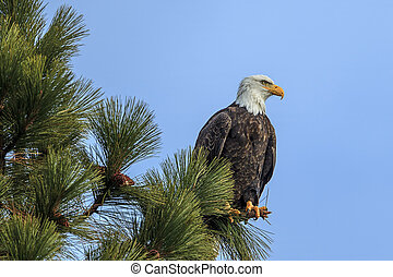 Eagle perched against a blue sky.