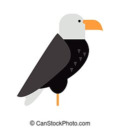 Eagle raptor wildlife bird vector.