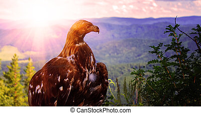 eagle sits on top of a tree