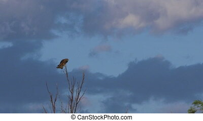 Eagle sitting on top of a tree