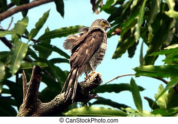 Eagle standing on a tree branch