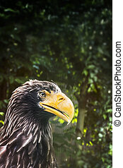 Eagle with huge yellow beak