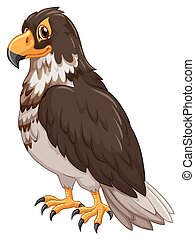 Eagle withe gray feather illustration