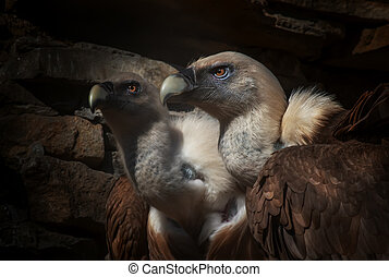 Eagles family vultures portrait on stone background. Close-up. Unrecognizable place. Selective focus