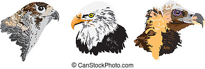 Eagles made in eps Abstract