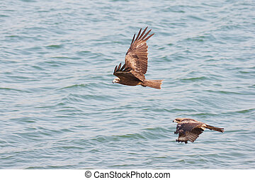 eagles over water