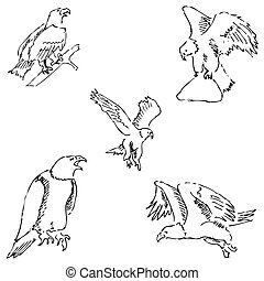Eagles. Sketch pencil. Drawing by hand Vector image