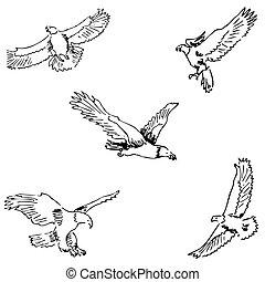 Eagles. Sketch pencil. Drawing by hand Vector