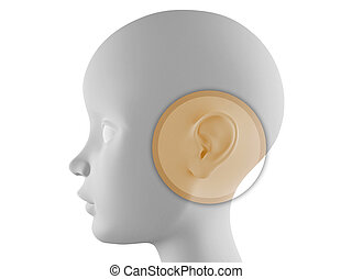 Ear examination - Neutral head profile with ear in evidence