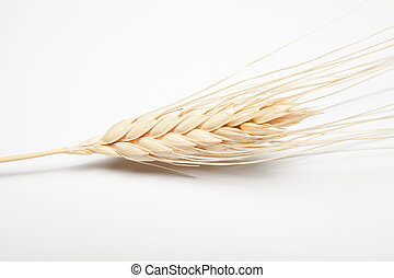ear of barley (isolated)