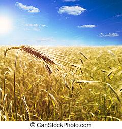 Ear of barley on barley field