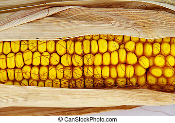 An ear of corn, with the husks still on