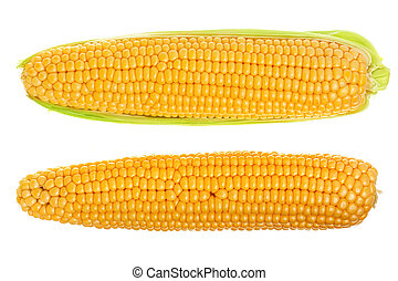 ear of corn isolated on a white background. Top view