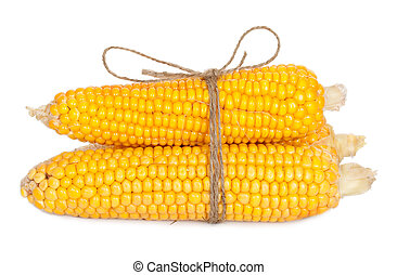 Ear of corn with rope