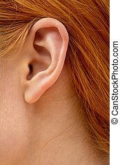 ear of redhead lady - color closeup picture of redhead lady ...