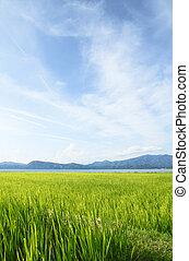 Ear of rice and lake in Akita, Japan