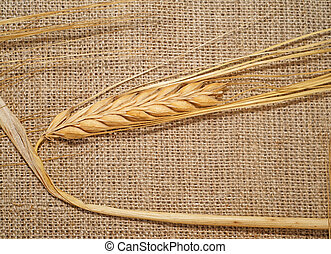 Ear of wheat on a rough fabric