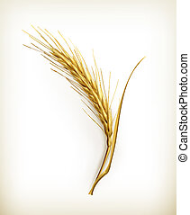 Ear of wheat, vector