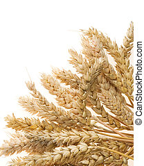 ear of wheats  isolated on white background