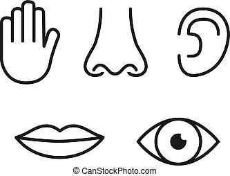 (ear), set, contorno, (eye), sapore, (nose), udienza, senses:, cinque, umano, tocco, icona, tongue), (hand), odore, visione, (mouth