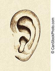 Sketch illustration of human ear