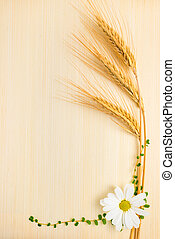 ear  wheat with chamomile and grass on wooden background
