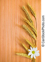 ear  wheat with chamomile on wooden background
