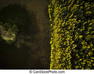 Early autumn forest, aerial drone top down view