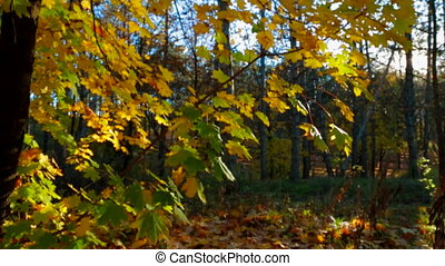 Early Autumn In The Forest. Bright Colors