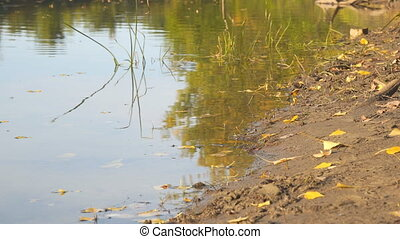 River Bank in early autumn, on the shore of a little yellow fallen leaves