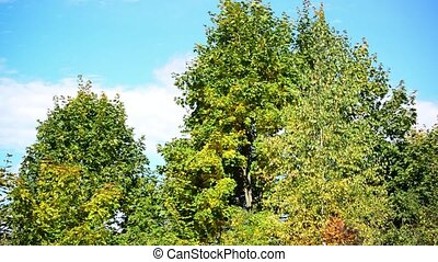 early autumn trees on sunny day