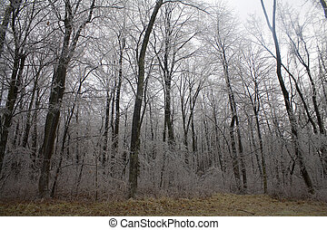 early ice storm in a forest